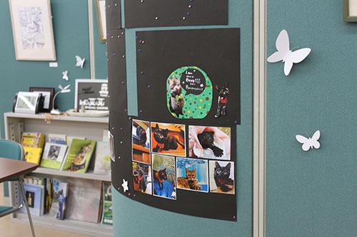 犬と猫の写真を壁に貼って、飾っているところの写真です。